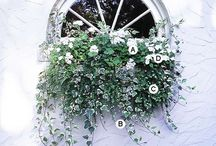 Outdoors | Winter Plants