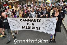 Green Weed Mart – Medical Marijuana Marketplace / Medical marijuana classified marketplace website for advertising safe cannabis products - medical weeds, clones, dispensaries, delivery service, doctors & clinics, concentrates, equipment etc. http://www.greenweedmart.com/