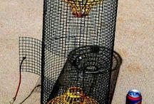 crayfhis trap