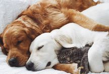 Cats & Dogs ❤
