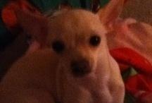Doggy / My dog
