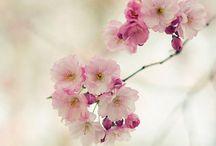 Flower,Fleur,Flor