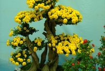 Bonsai Flowers