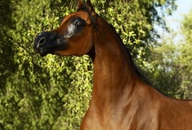 Horses / by Amber Artz-Adams