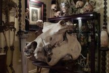 Kunstkammer / Cabinets of curiosities