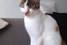 My cat Diva