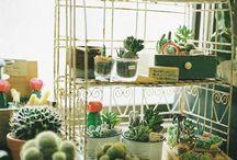 Plants / by Mujahid Saddam