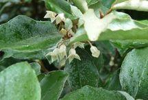 Jardin Parfumé d'automne - Chambres d'hôtes/Jura- www.lesmaisonsfougere.com / Arbustes et plantes parfumés qui fleurissent à l'Automne à Darbonnay. Situées autour de la Bulle à Parfums. Bulle à parfums / Jardin (Jura)