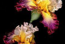 FLOWERS_BLACK