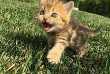 Gattino ino
