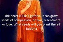 philosophy buddha