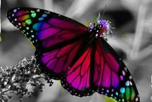I love butterflies ;)