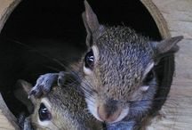 Dr. Robin D.V.M.'s Blogs / The Humorous and Educating Stories of the daily life at the Peace River Wildlife Center written Dr. Robin Jenkins, PRWC's Director of Veterinary Services. Please Share these Great Stories with your Family & Friends!