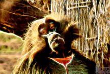 Animals of light / In natura, la luce crea il colore. Nella pittura, il colore crea la luce. Hans Hofmann