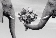The Elephants / The smartest, admirable & peaceful animals on this planet .. They deserve our respect!