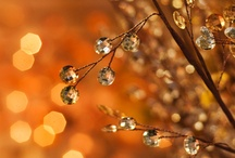 Autumn and Thanksgiving / by Lisa Glover