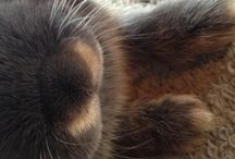 Clover the bunny from tasmania  / Clover in all his cuteness