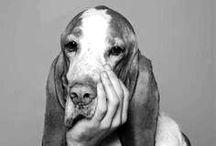 kutyóka
