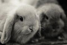 Rabbit mad