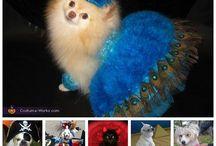 Costumes para mascotas