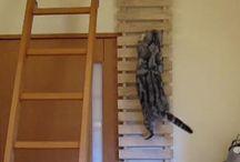 tangga kucing