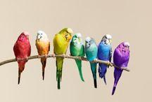 species birds