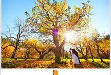 Weddings at Dawn Ranch Lodge / Weddings at Dawn Ranch Lodge