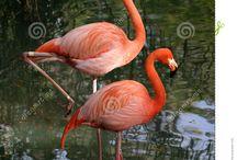 flamingos / by Sue Crawford