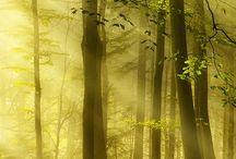 TREES - SO BEAUTIFUL