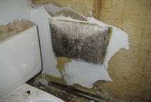 About Black Mold / Black mold (aka toxic mold) is a health hazard that triggers mild to severe allergies in people. Recognize the signs of exposure and protect yourself and your family from toxic black mold.