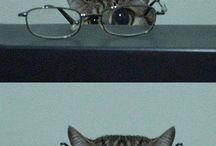 Catlady