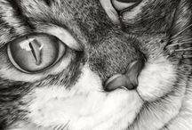 Zvířata / pejsi, kočky, papušci........