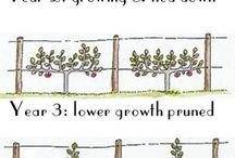формировка деревьев