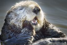 otterly gorgeous