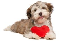 Valentine's Day  / by Deceased Pet Care Funeral Homes