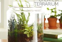 Terrariums / How-to's and Information on planting and caring forTerrariums.