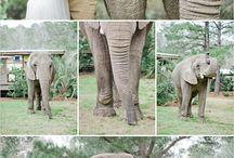 Safari ideas