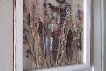 Pressed and Dried Flowers