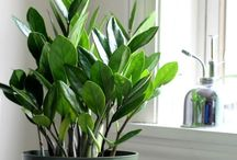 indoor plants idea