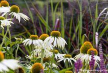 Let it bloom in August/September / Flowers for late summer - August/September