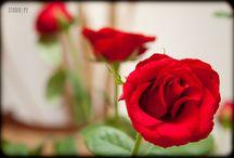 Dettagli wedding / Dettagli, particolari e sintesi di stile...