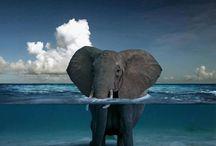 elephants and monkeys