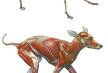 animal anatomy