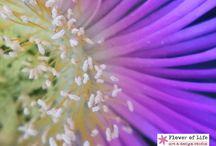 My macro nature photography :-)