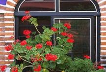 Windows flowers