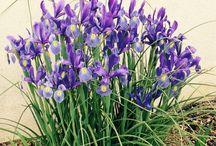 Fleurs et Nature / prises en direct par mes soins