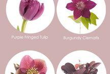 Flores e seus tons