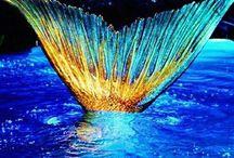 Sirene e animali marini