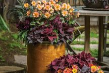 Fall Container Ideas / Have some of your plants thrived whereas others have died out in your summer containers? Transition some of those annuals into beautiful fall containers! Not all planters have to contain annuals, mix it up with tropicals, perennials, herbs and more!