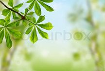 My pictures sold on the microstock sites